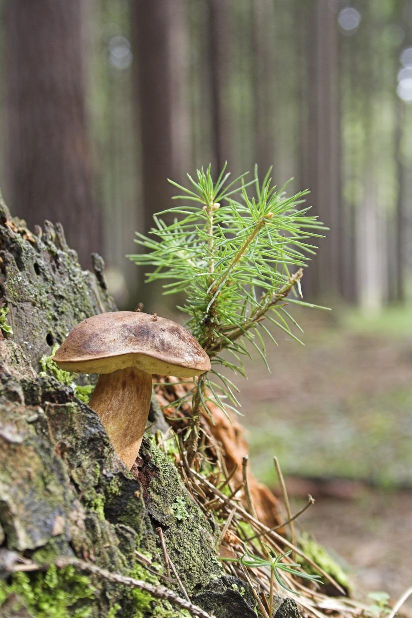 wild_mushroom_close_green_wood_forest_tiny_tree-1260967.jpg