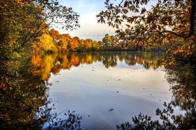 autumn_leaves_fall_nature_season_color_october_seasonal-767978