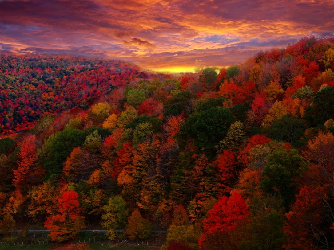 Fall Foliage Photography