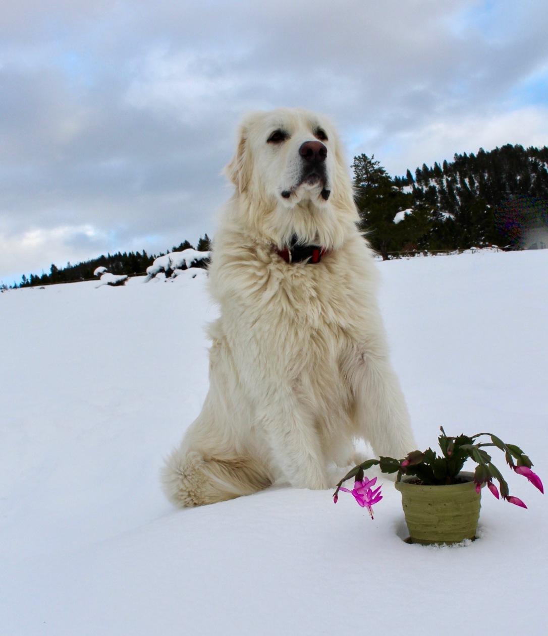 Stoic Arthur in the snow