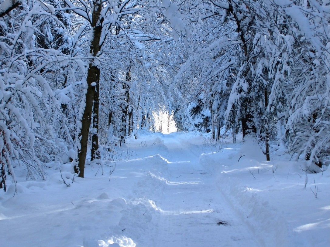 snow_forest_path_walk_recovery_relaxation_snowy_trees_wintry-496806